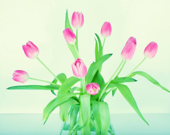 flower-1210166_1920